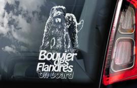 Bouvier des Flandres V01