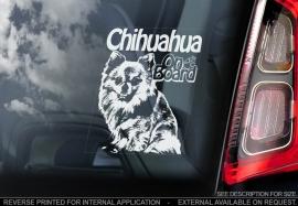 Chihuahua Langhaar V02