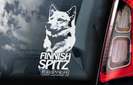 Finse Spits - Finnish Spitz V01