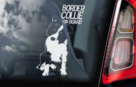 Border Collie V01