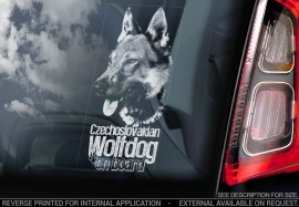 Tsjechoslowaakse Wolfhond - Czechoslovakian Wolfdog   V06