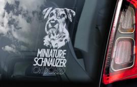 Dwerg Schnauzer - Miniature Schnauzer V05