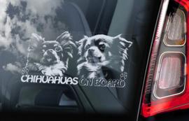 Chihuahua langhaar V09
