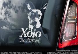 Mexicaanse Naakthond - Xoloitzcuintle - Mexican Hairless Dog - Xolo V01