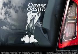 Chinese gekuifde naakthond V2