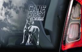 Cane Corso  V09