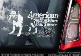 American Stafforshire Terrier  V08