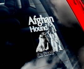 Afghaanse Windhond - Afghan Hound V01