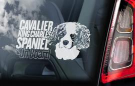 Cavelier King Charles Spaniel V06