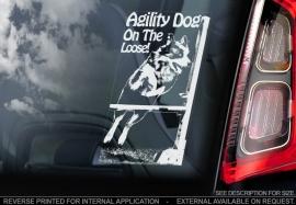 Agility dog on the loose V01