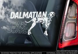 Dalmatier- Dalmatian - V02