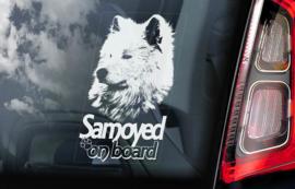Samojeed - Samoyed V02