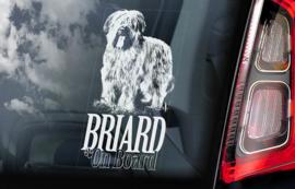 Briard V01