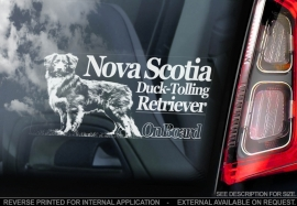 Nova Scotia Duck Tolling Retriever V01