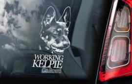 Australian Kelpie V02