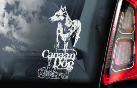 Canaan Dog V01