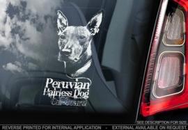 Peruaanse Naakthond  - Perro Sin Pelo del Peru - Peruvian Hairless Dog V01