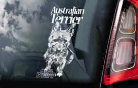 Australische Terrier -  Australian Terrier V01