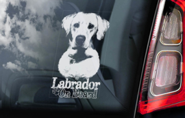 Labrador Retriever V11