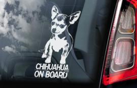 Chihuahua korthaar V01