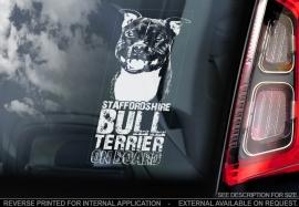 Staffordshire Bull Terrier V07