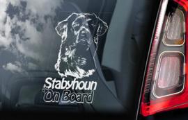 Friese Stabij - Stabyhoun V01