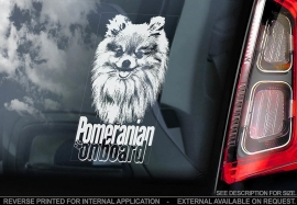 Pomeranian V03