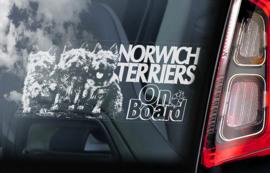 Norwich Terrier V02