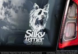 Australian Silky Terrier V01