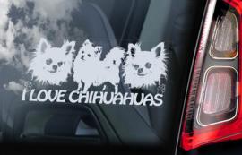 Chihuahua langhaar V08