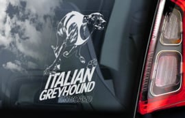 Italiaans Windhondje - Italian Greyhound V03