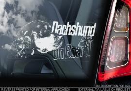 Dashond langhaar - Dachshund  -  V04