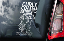 Curly Coated Retriever V01