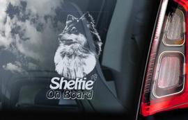 Shetland Sheepdog - Sheltie V02