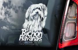 Havanezer - Bichon Havanais -   Havanese V01