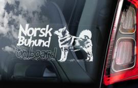 Norsk Buhund V01