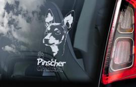 Pinscher V02