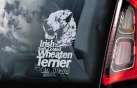 Irish Softcoated Wheaten Terrier V02