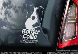 Border Collie V06