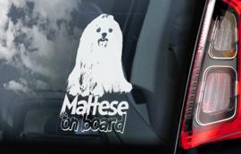 Maltheser langhaar -  Malthese Terrier V02