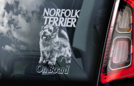 Norfolk Terrier V02