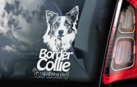 Border Collie V03
