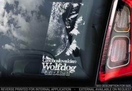 Tsjechoslowaakse Wolfhond - Czechoslovakian Wolfdog  V05