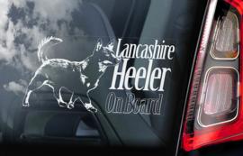 Lancashire Heeler V01