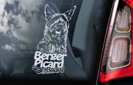 Picardische Herdershond -  Berger Picard  V02