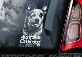 Australian Cattle Dog V03