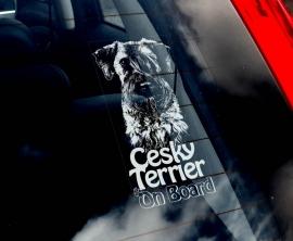 Cesky Terrier V01