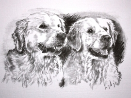 Wenskaart Golden Retriever 1 (2 Golden)
