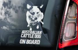 Australian Cattle Dog - Blue Heeler V02