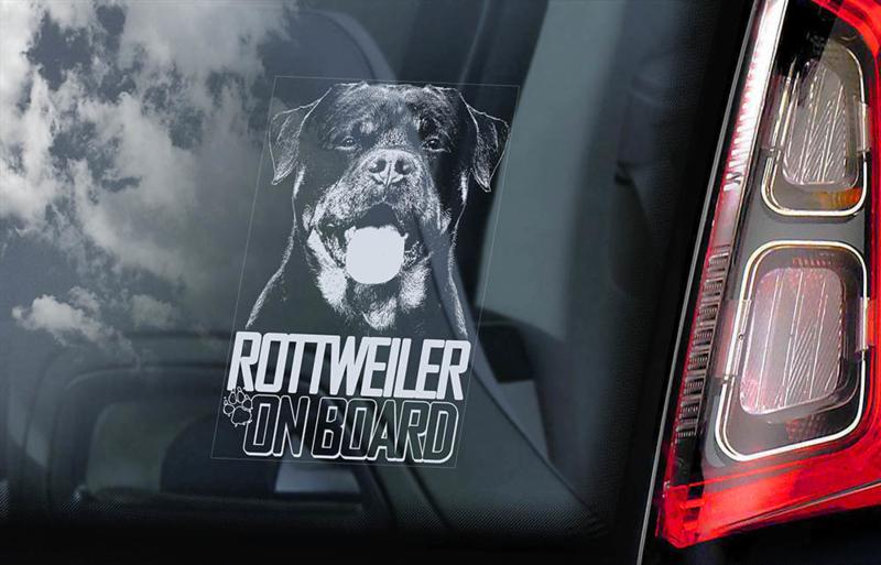 Rottweiler V06